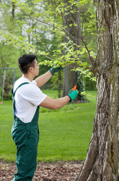 Tree Service in Eden Prairie Performed by a Nature's Touch Team Member