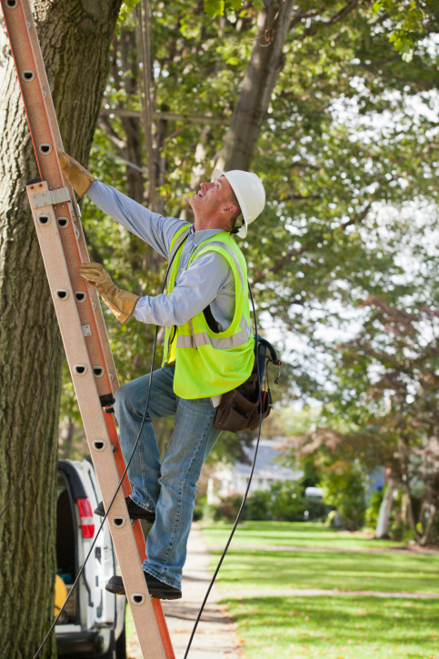 An Edina Tree Care Arborist at work for Nature's Touch Tree Care and Landscaping